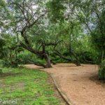 Trail at the Mc Allen Nature Center