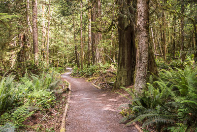 Photo of the trail through ferns and forrest
