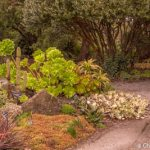 Part of the succulent garden