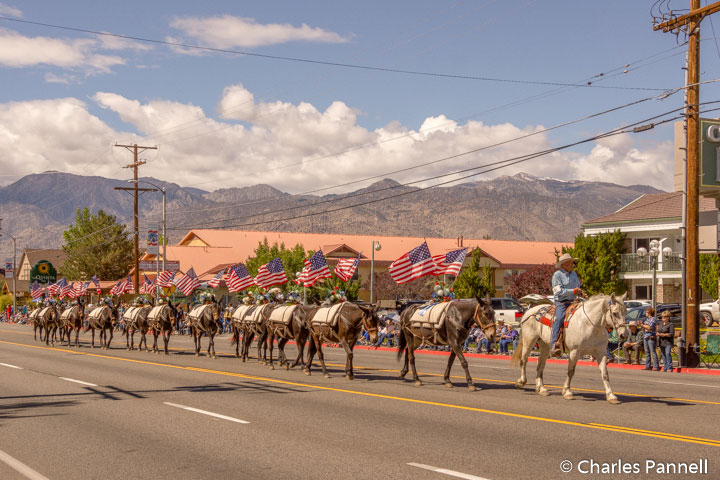 Mule Days — An Eastern Sierra Tradition