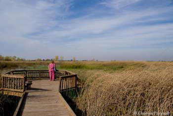 Viewing platform overlooking the marsh on the Lost Slough Trail