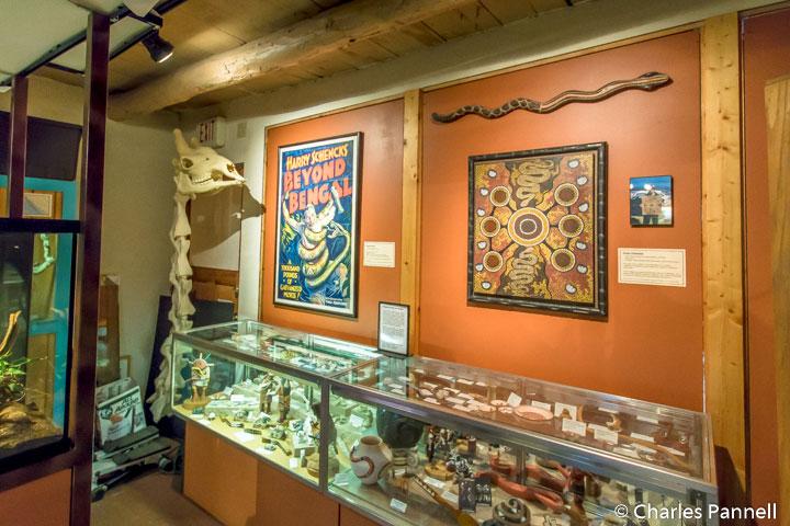 All things rattlesnake at the American International Rattlesnake Museum