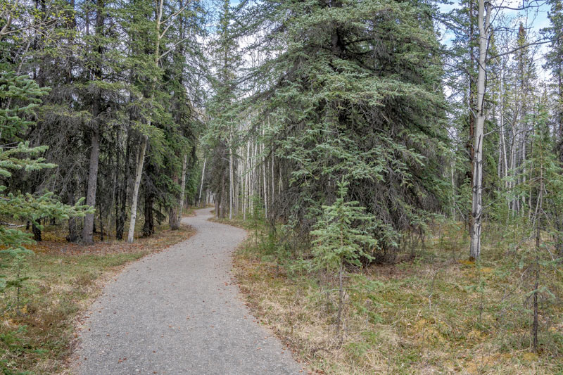 The McKinley Station Trail starting from the Riley Creek Campground in Denali National Park