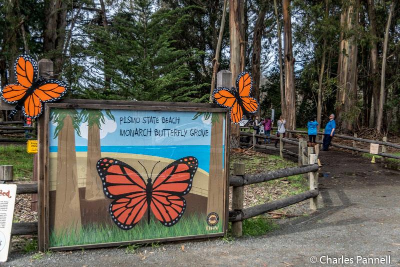 Pismo Beach Monarch Butterfly Grove