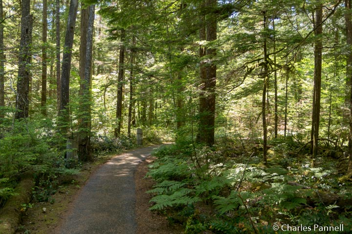 River Loop Trail in Northern Cascades National Park