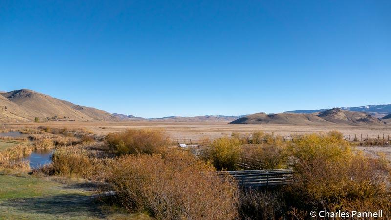 National Elk Preserve just outside Jackson, Wyoming
