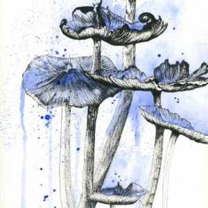 mushroom art, watercolor mushrooms, mushroom drawing