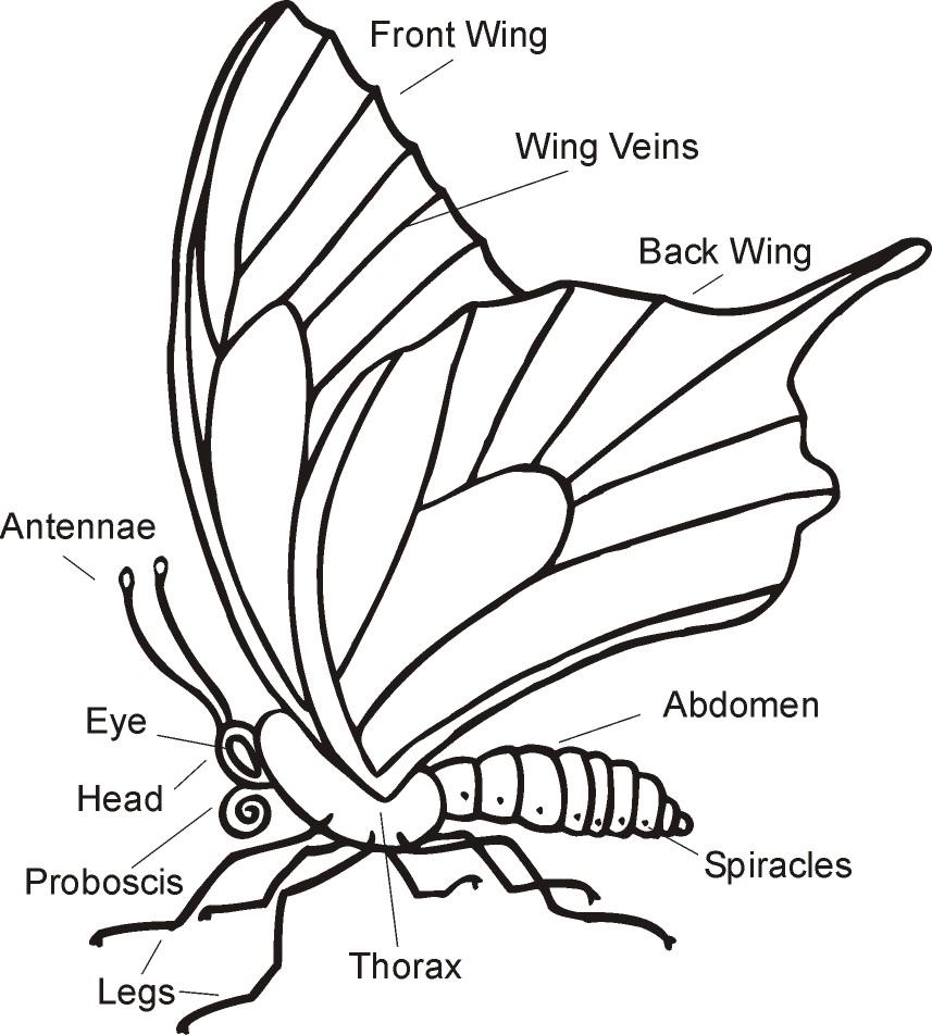 simple caterpillar diagram