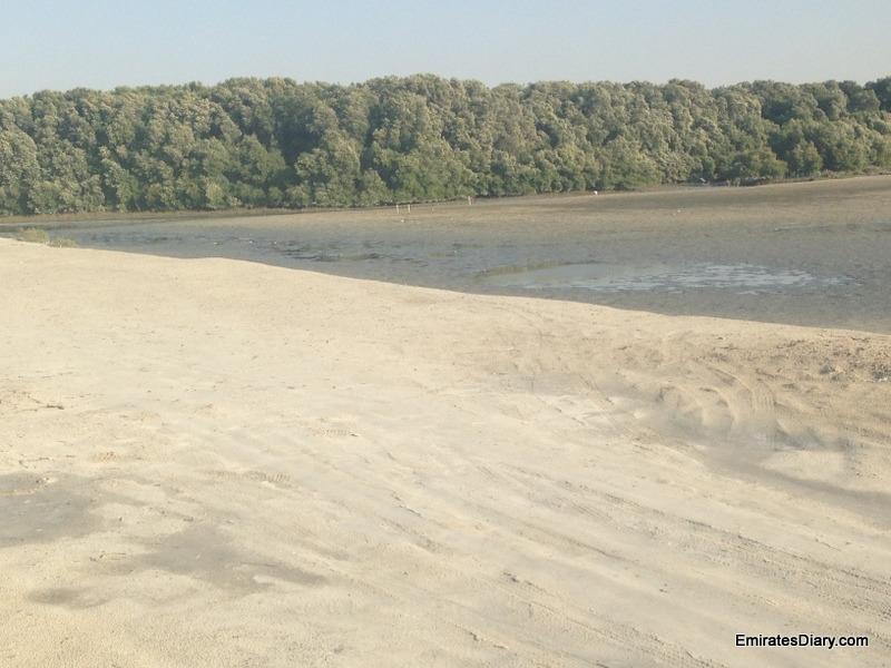 ras-al-khor-wildlife-santuary-pictures-11