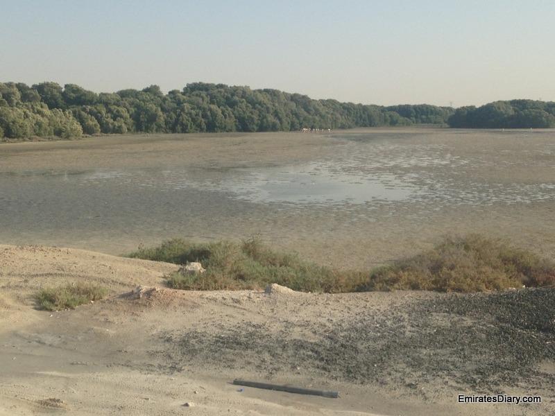 ras-al-khor-wildlife-santuary-pictures-12