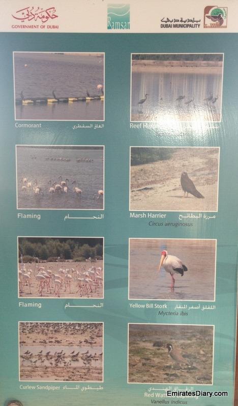 ras-al-khor-wildlife-santuary-pictures-18