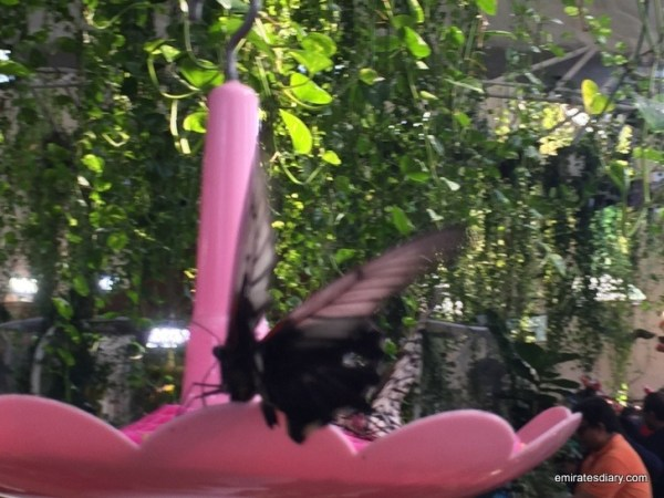 42-butterfly-garden-dubai-pictures-2015-emiratesdiary-042