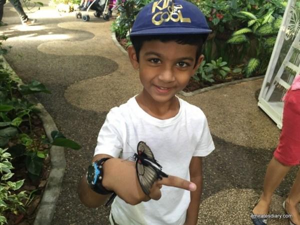46-butterfly-garden-dubai-pictures-2015-emiratesdiary-046