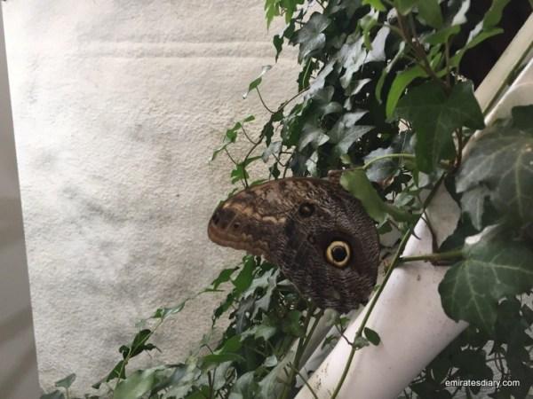 55-butterfly-garden-dubai-pictures-2015-emiratesdiary-055