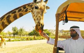 Al Ain Zoo Opens World's Largest Man-Made Safari Park