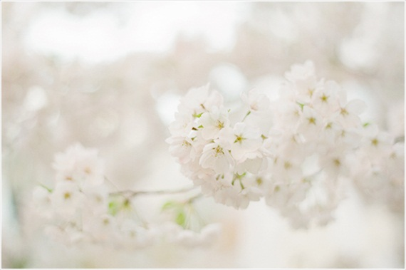 Stefanie Kapra Photography - Cherry Blossom E-Session