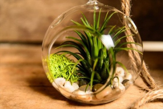 moss air plant hanging decor