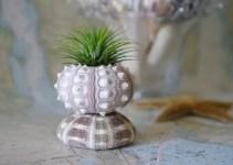sea urchin air plant holder