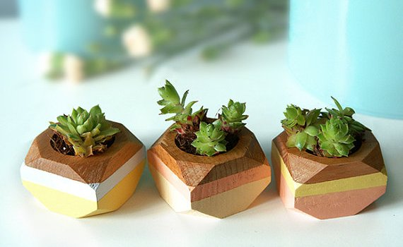 succulent-planters-geometric