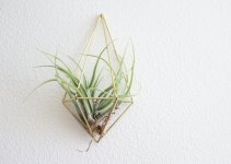 wall sconce air plant modern geometric