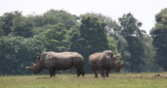 Rhinos at ZSL Whipsnade Zoo