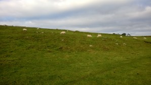 Sheep near Hadrian's Wall
