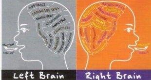 brain-function