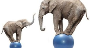 African elephant female and her baby elephant balancing on a blue balls.