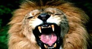 Emprender es aprender a ser un león en los negocios