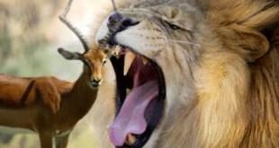 Qué tipo de emprendedor sos: ¿León o gacela?