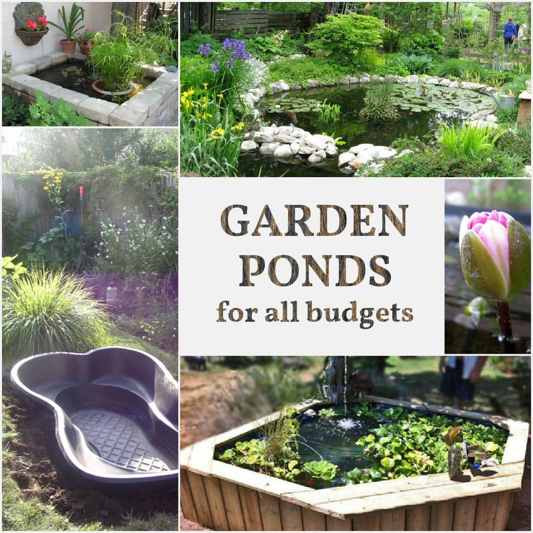 20 Beautiful Backyard Pond Ideas For All Budgets