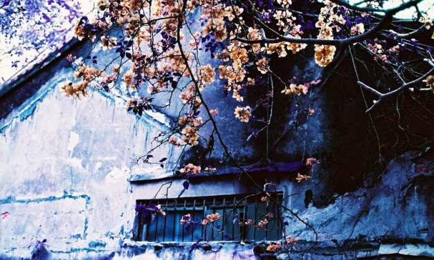 Final Spring – LomoChrome Purple 400 (35mm)