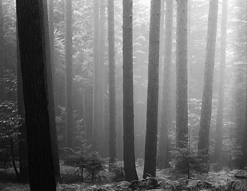 Forest and Fog # 3 Pentax 67II Pentax 165mm f/4 LS Kodak T-Max 100 — Appennino Tosco Emiliano, Italy.