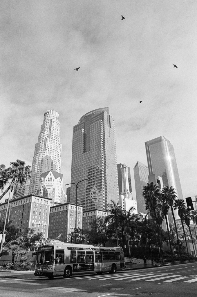 Circling Prey - 35mm Kodak T-MAX 400 souped in HC110 (1:50 for 10min)