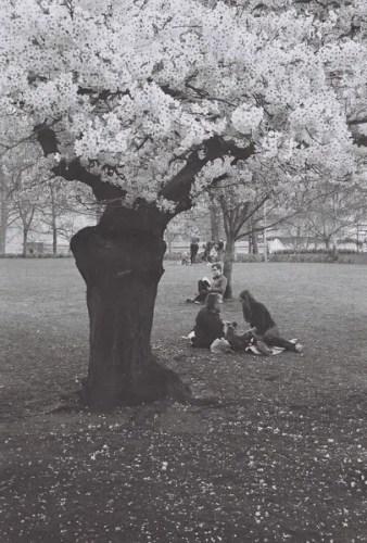Untitled. St James's Park, London (Apr' 15)