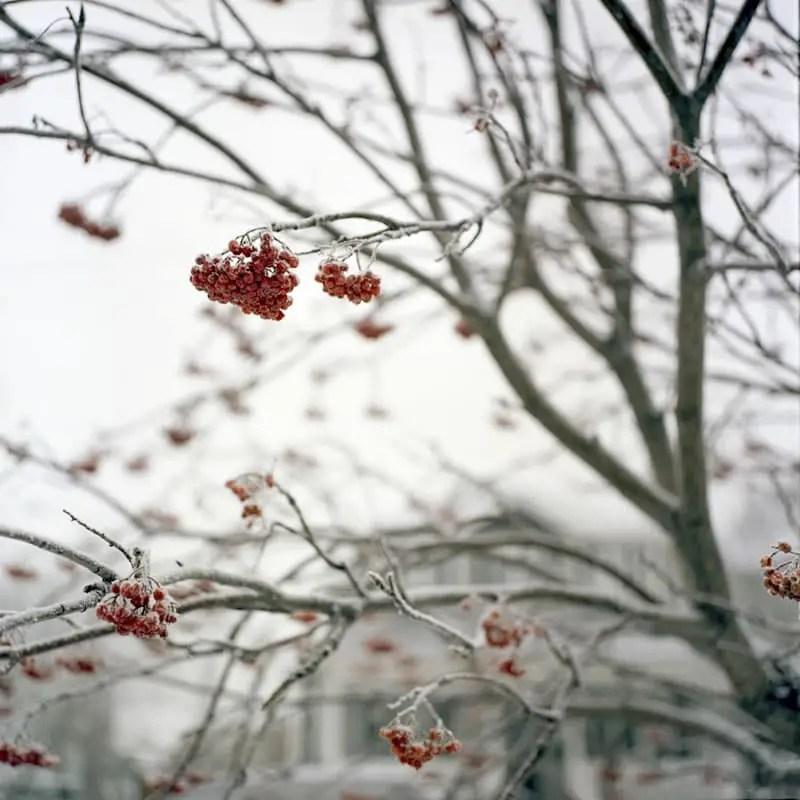 """Frost"", Inglewood Calgary, Alberta - Rolleiflex 3.5F   Kodak Portra 400"
