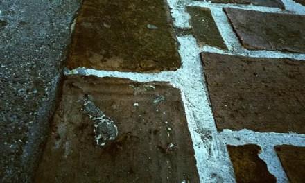 Urban crab-oflage – Fuji 64D 8552 (35mm)