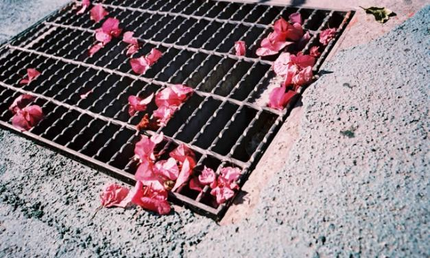 Grate pinks – Lucky Color Film Super 200 (35mm)
