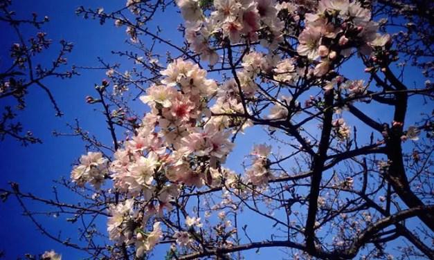 Sakura – Kodak EKTACHROME 100VS (E100VS) – 120