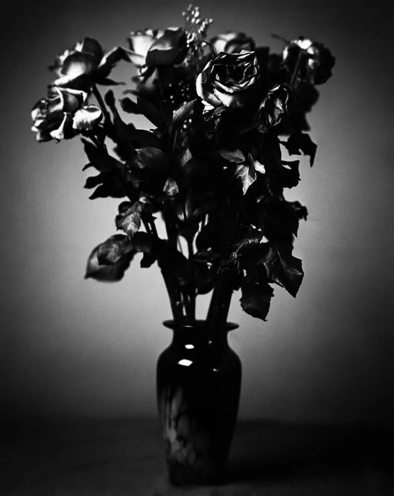 Roses - Ilford Delta 100 Professional