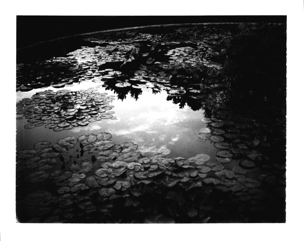 Fuji FP3000B - Polaroid 410 Land Camera