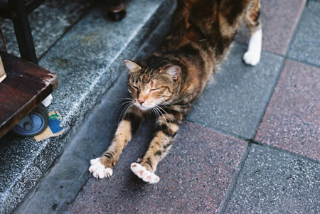 ….and stretch – Kodak 250D 5207 (35mm)