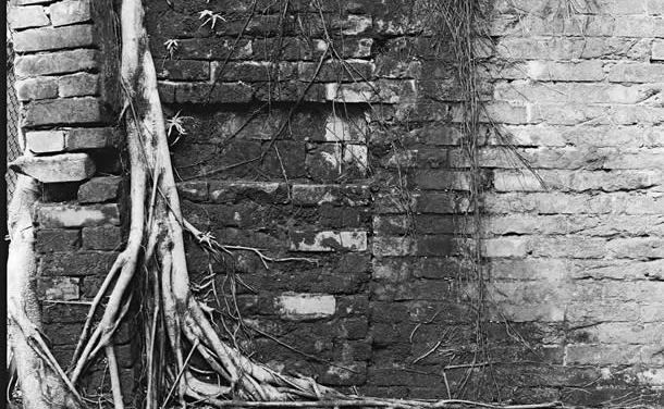 Deep-rooted – Ilford HP5+ (120)