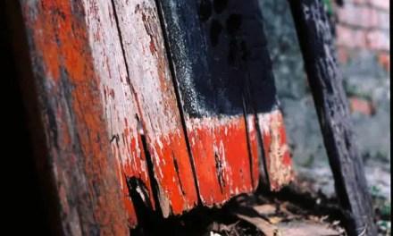 Evanesce – Kodak Ektar 100 (120)