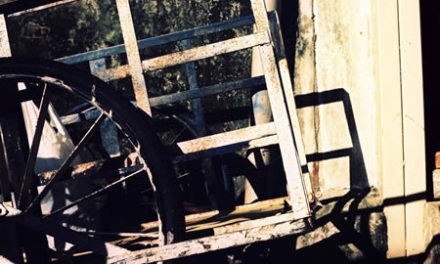 Cart – Kodak EKTACHROME E100VS (120)