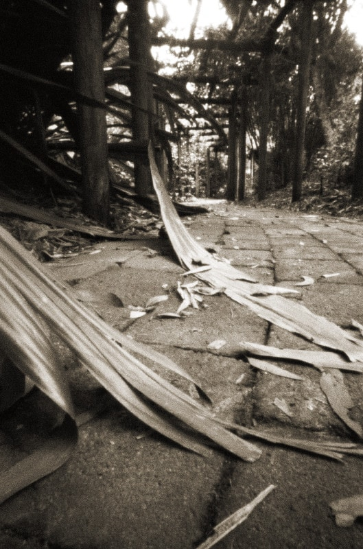 Coffs Harbour Botanic Gardens -Taron VL 35mm pinhole camera, Fuji Neopan 400
