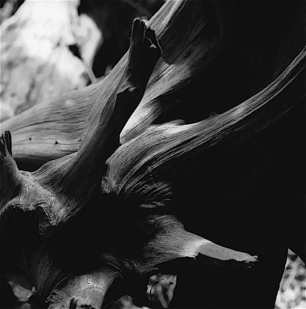 Beauty in Death: Mamiya C330S, 80mm on Ilford Pan F+