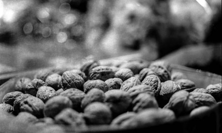 Nuts to it all – Rollei RPX400