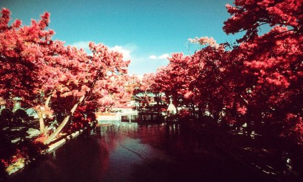 Tranquility – Kodak AEROCHROME III 1443 (35mm)