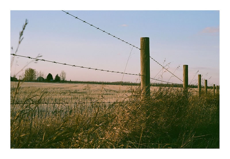 Alberta Prairie - Drew Amyot